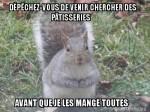 Meme_petit_dodu